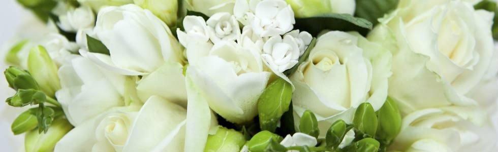 primo piano di alcuni fiori bianchi