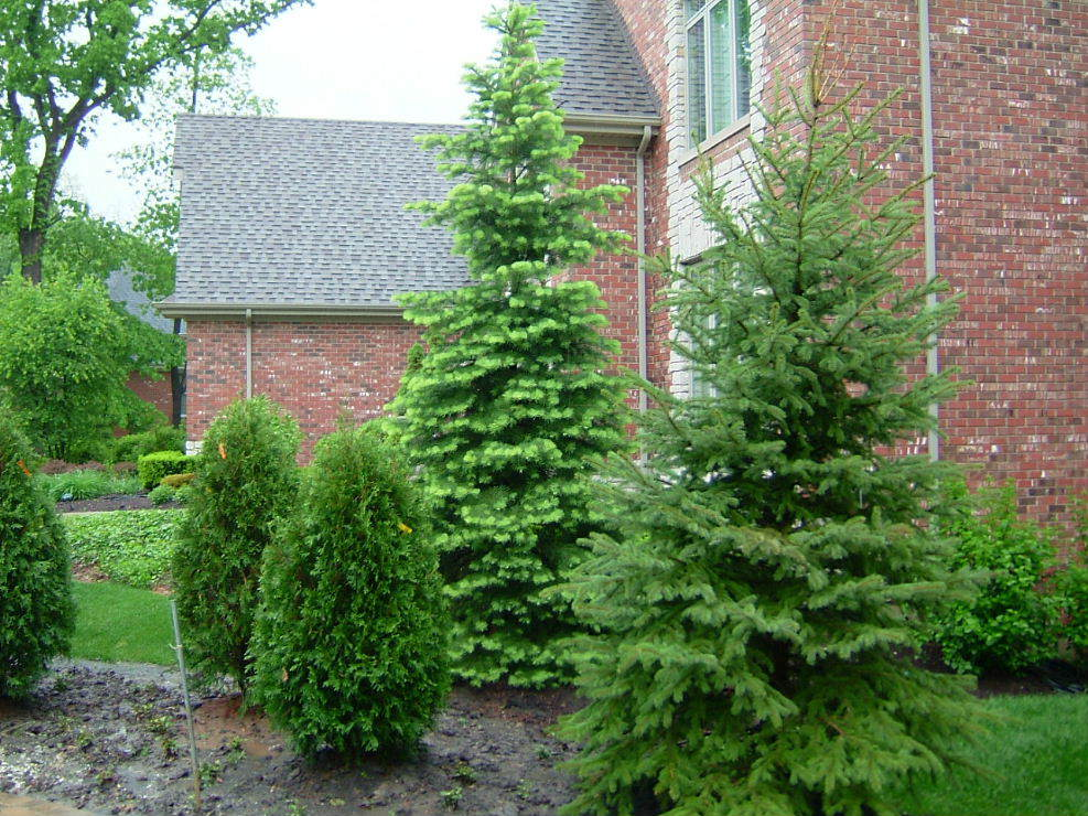 Evergreen trees garden landscaping center chicago for Home and garden design center colorado springs