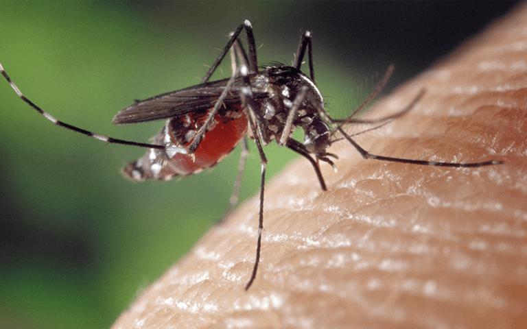 allontanare la zanzara tigre