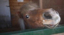 scuola di pony, maneggi, lezione di monta inglese