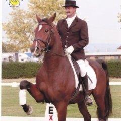 dressage, fantino, istruttore equitazione II livello