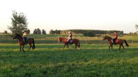 pulizia cavalli