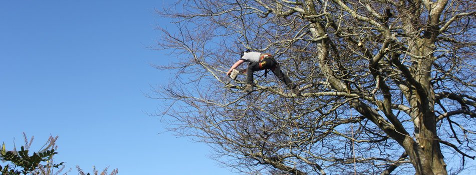 Tree surgery and landscaping in Cornwall