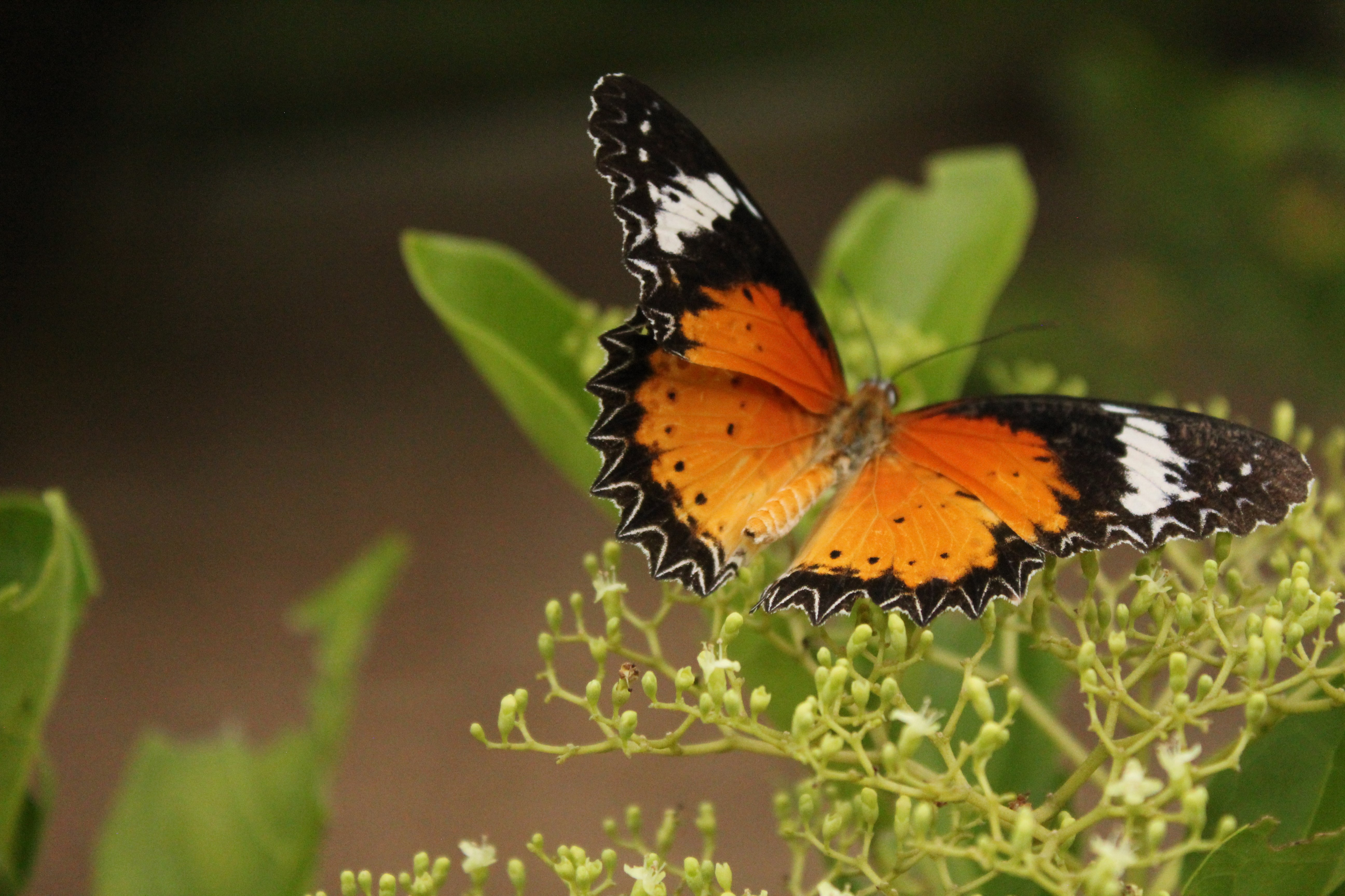 Butterfly Hill - Palau Ubin