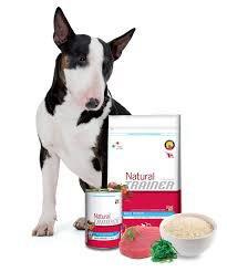 bull terrier vicino a cibo per cani