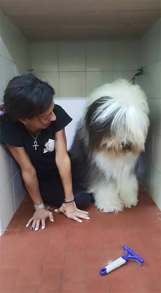 donna seduta vicino a un cane per Toelettatura