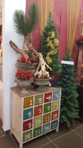 Alberi di Natale ecologici