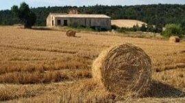 Agro Abruzzo srl - tutto per l'agricoltura - Bellante, Teramo