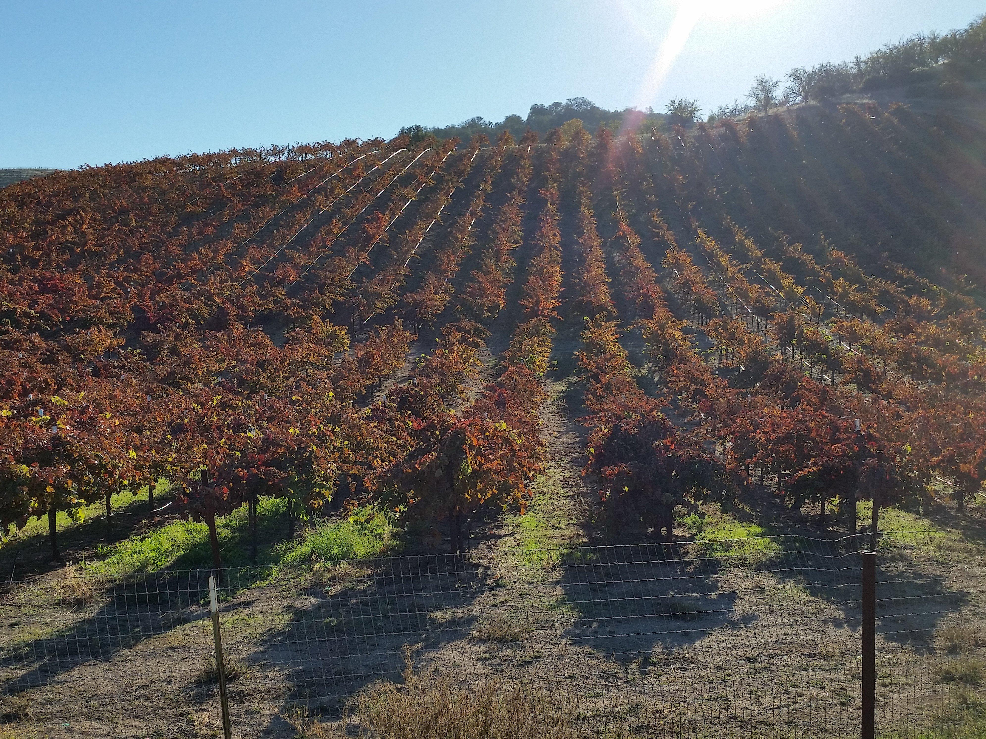 Alliance Septic Grape Field