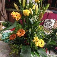 fiori e pianti per locali