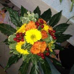 piante e fiori da appartamento