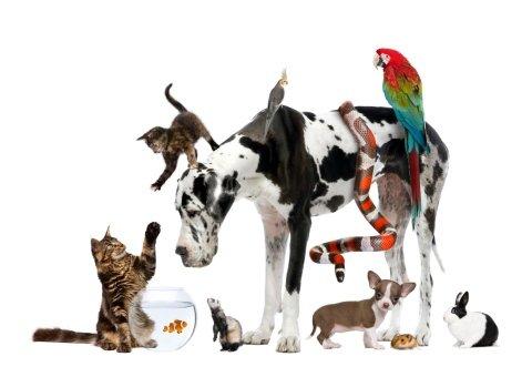 prodotti per piccoli animali