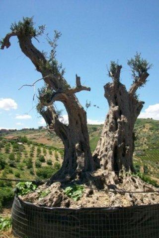 coltivazione alberi da frutto