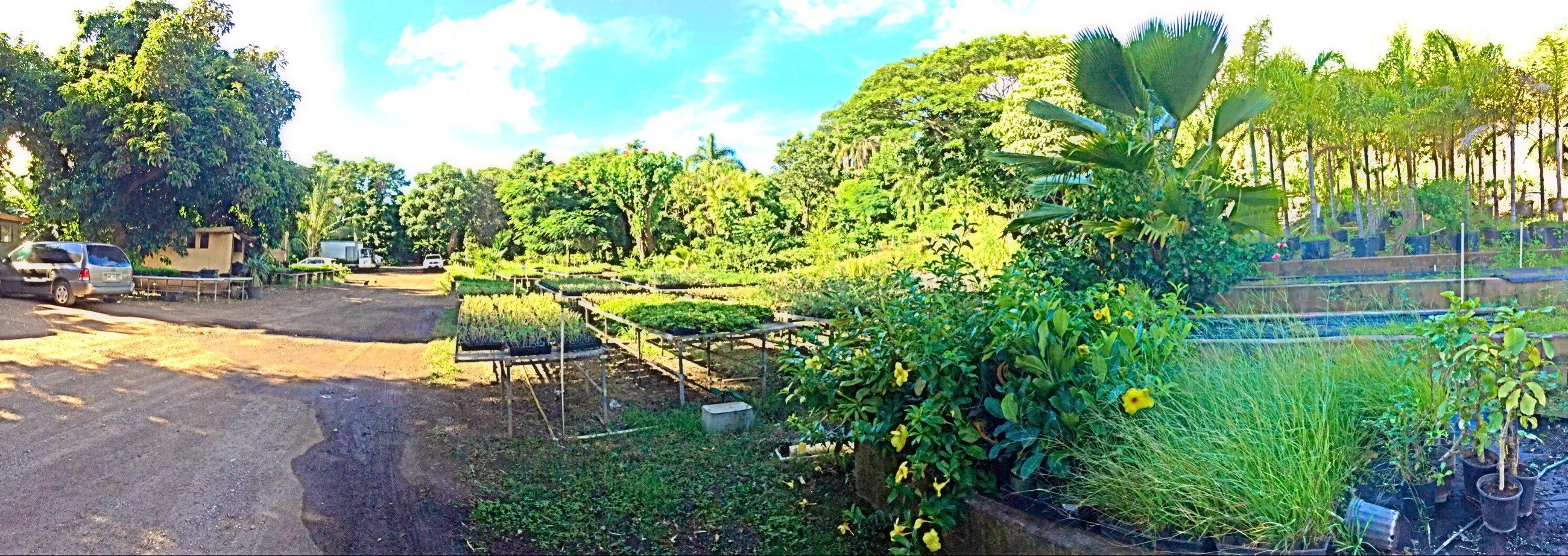 Kihei Gardens U0026 Landscaping