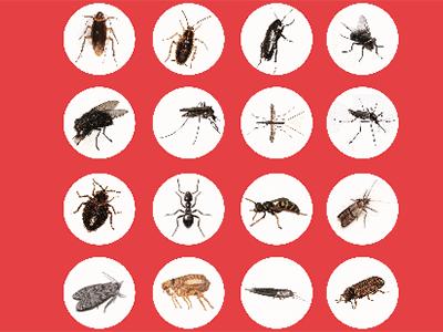 disinfestazione da insetti
