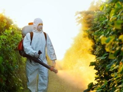 rimozione professionale nidi vespe