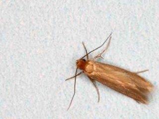 disinfestazione insetti delle derrate