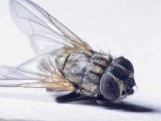 erogatori di insetticida spray