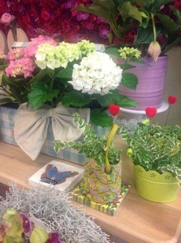 dei vasi con piante fiorite e edere
