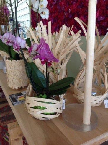 vasi di orchidee fatti in bamboo