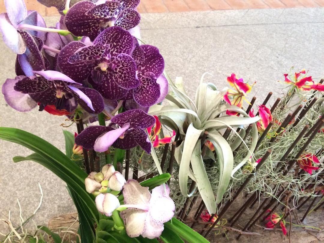 delle orchidee di color viola
