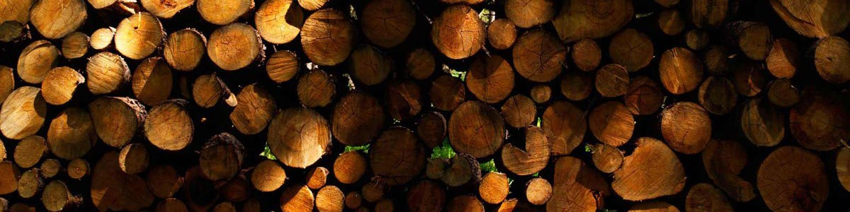 woodlogs-forest