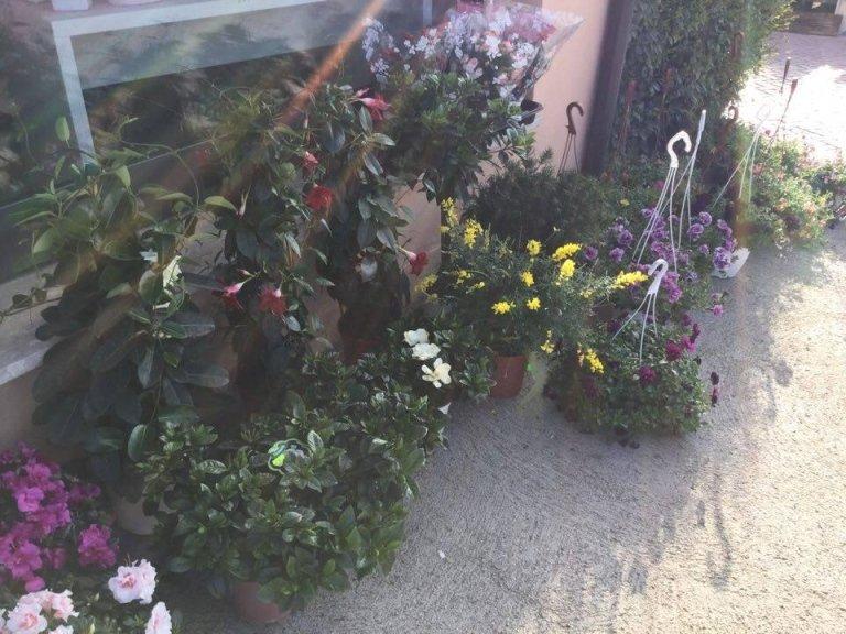 fiori FR