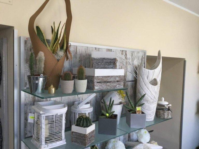 piante e fiori FR