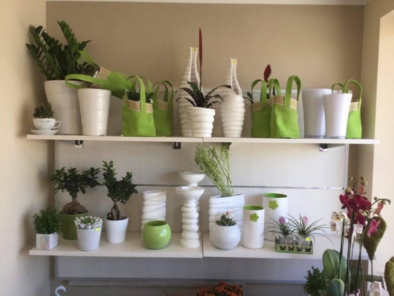 piante per cimitero