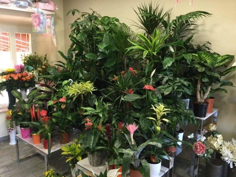 piante Frosinone
