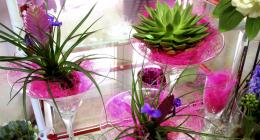 cactus, piante, piante d'appartamento, bonsai, fiori di stagione