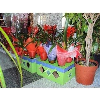 piante per funerali