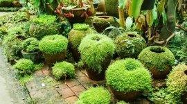 piante per l'esterno
