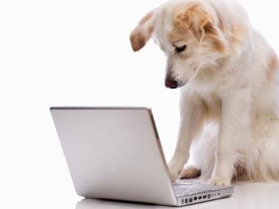 laboratorio analisi veterinario