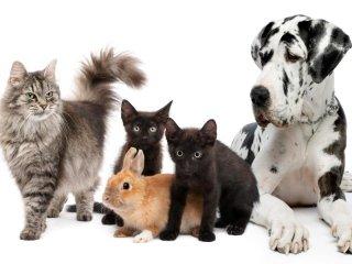 visite specialistiche animali