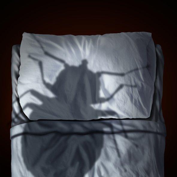Bed Bug Control San Antonio, TX