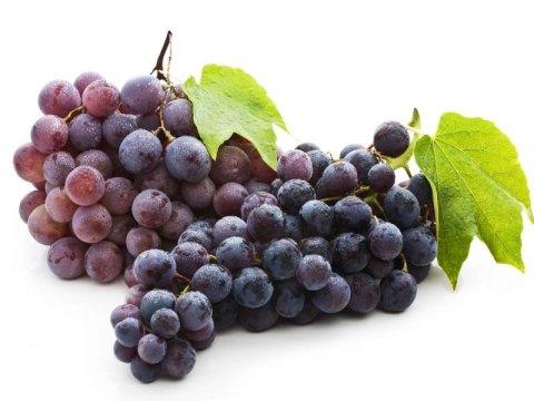 Commercializzazione uva da tavola