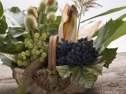 Specialità coltivazione uva da tavola