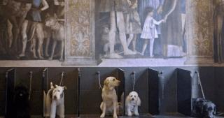 cani attendono toelettatura