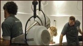area asciugatura pelo cani