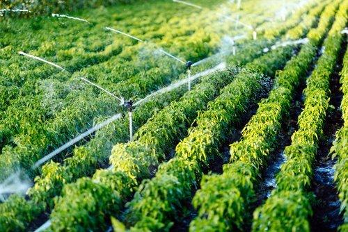 sistema d'irrigazione piante