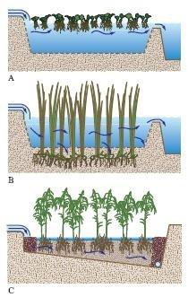 disegno di depurazione naturale delle acque reflue