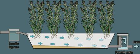 fitodepurazione_trattamento e recupero acque di scarico