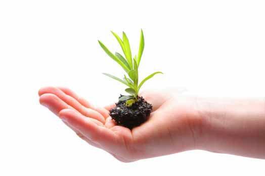 una mano con della terra e dell'erba