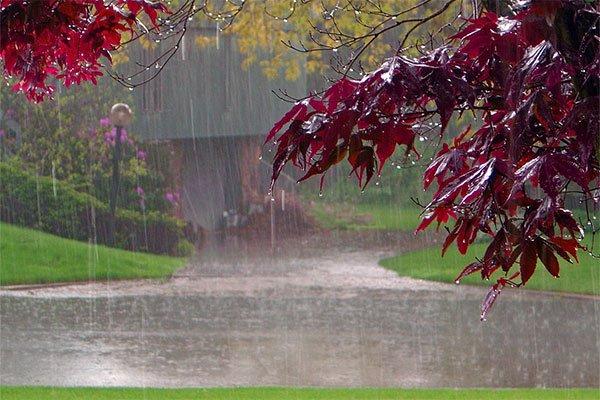 degli alberi con delle foglie bordeaux durante una giornata di pioggia