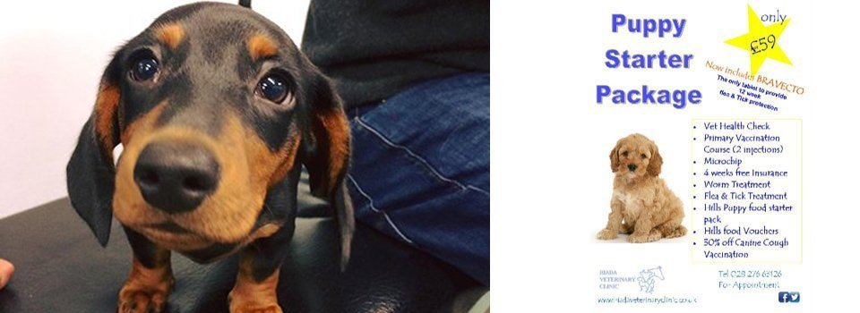 free pet insurance