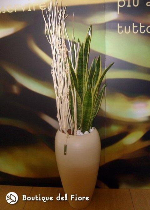 piante dal mondo