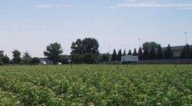 fornitura piante, produzione piante, alberi da frutto