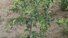coltivazione alberi, piante da frutto, piante e fiori