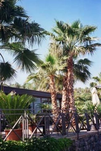 Palm trees of various sizes in front of a nursery
